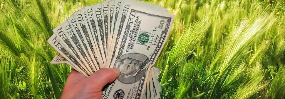 Agrodólares : el campo especula y espera menores retenciones